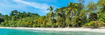 Stunning Costa Beach and Rainforest Scenery
