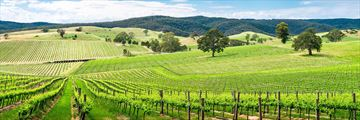 The Barossa Vineyards