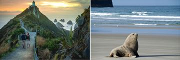 The Catlins & Otago Sea Lions