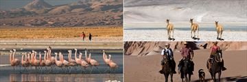 Beautiful wildlife, hiking and horseback riding in Tierra Atacama Boutique Hotel & Spa