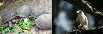 Tortoises & Birds in the Seychelles