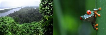 Aerial view of Tortuguero & Red eyed Tree Frog