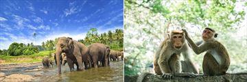 Udawalawe National Park & Yala National Park wildlife