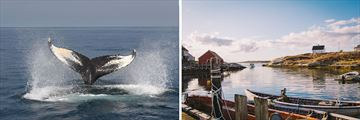 Whale Watching in Nova Scotia & Peggys Cove