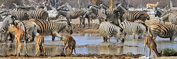 Wildlife drinking by the waterhole in Etosha National Park