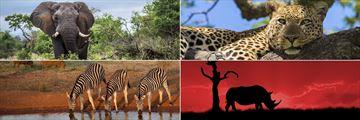 Wildlife in Kruger National Park, South Africa