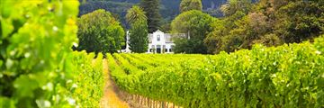Cape Dutch Manor House in the Winelands