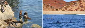 Sealions and humpbacks in Monterey, California