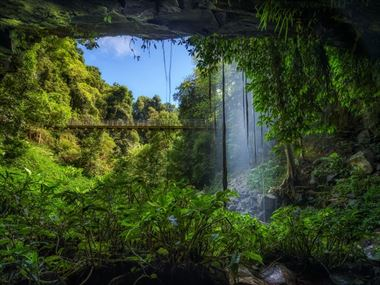 Exploring Australia's ancient rainforests