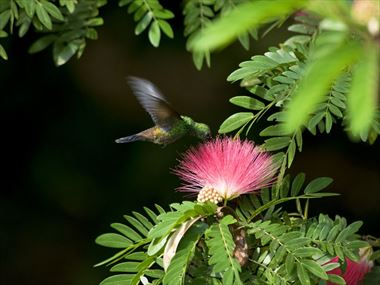 The Flora and Fauna of Tobago