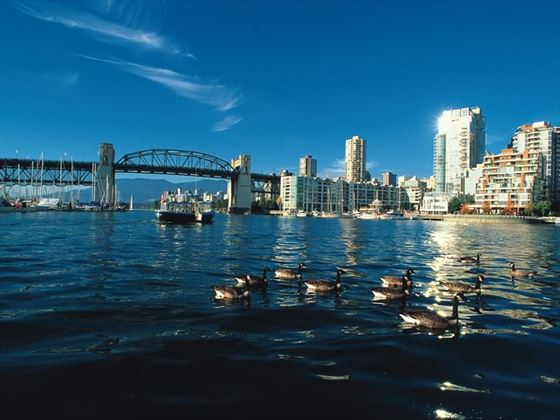 Aquabus and Ganada Geese on False Creek with Burrard Bridge and downtown Vancouver