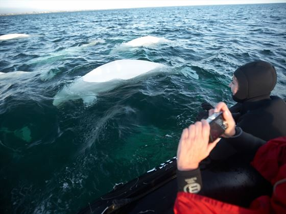 Whale watching, Churchill