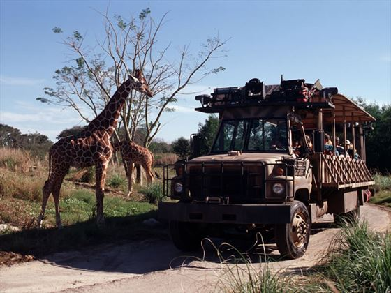 Kilimanjaro Safari, Animal Kingdom, Walt Disney World, Orlando