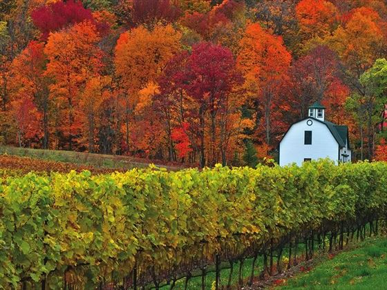 Vineyard, Niagara on the Lake, Ontario