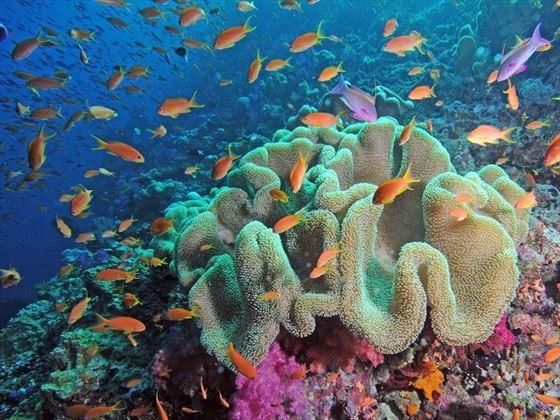 Qamea Resort Fish Diving