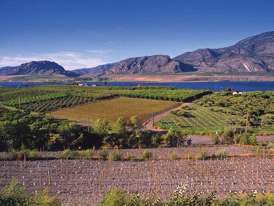 View of Okanagan Lake and vineyard at Cedar Creek Estate Winery, Kelowna