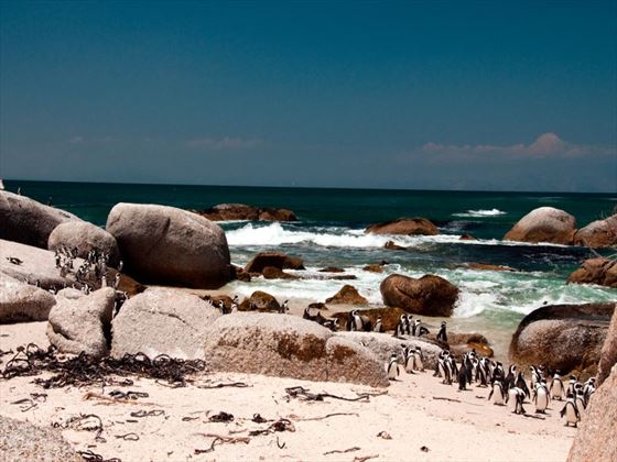 See penguins on the sand in South Africa