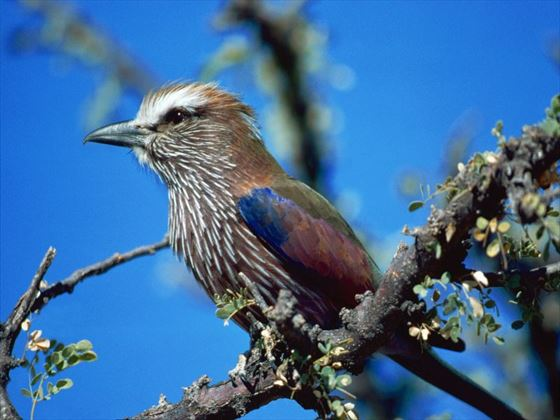 Birdlife in Chobe National Park