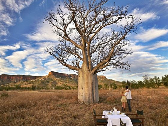Dining beneath a boab tree in The Kimberley