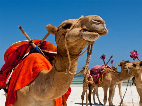 Camel riding at Leopard Beach Resort & Spa