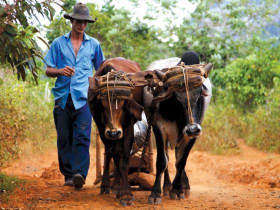 Vinales rural life