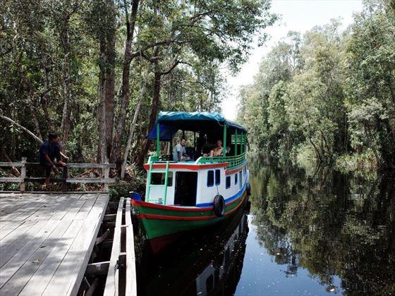 Orangutan River Cruise in Kalimantan