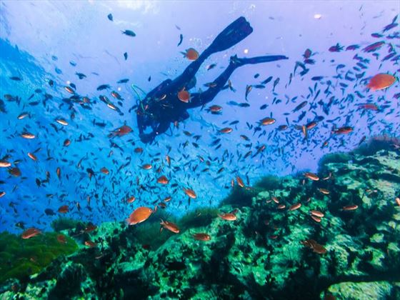 Diving Koh Tao, Thailand