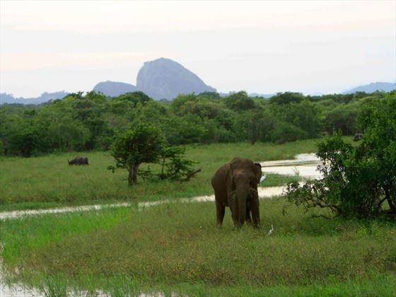 Elephants at Noel Rodrigo's Leopard Safaris