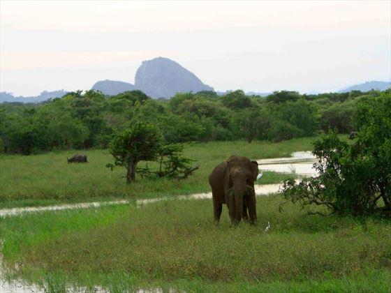 Elephants at Noel Rodrigo's Leopard Safaris