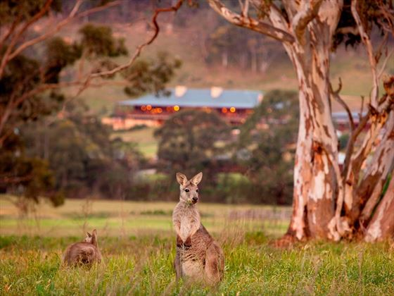 Emirates One and Only Wolgan Valley Wallaby Outside