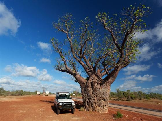 Four wheel drive by boab tree near Broome