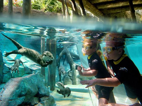 Freshwater Oasis at Discovery Cove® Orlando