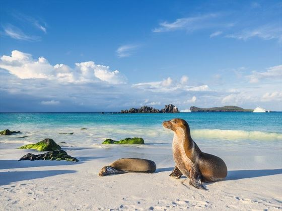 Galapagos Sea Lions on the Beach