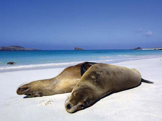 Sea lions in the Galapagos Islands