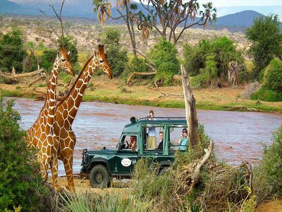 Game drives at Samburu Intrepids