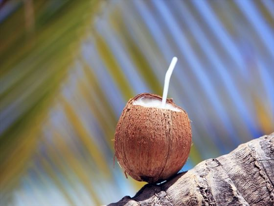 gettyimages 692863738 coconut in barbados