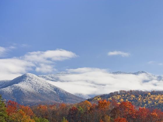 Light snowfall in the Great Smoky Mountains