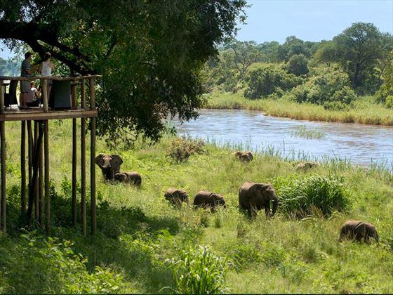 Elephants near the lodge