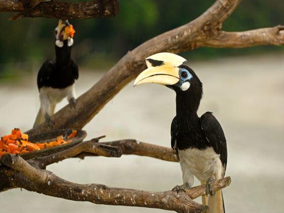 Local birdlife in Pangkor