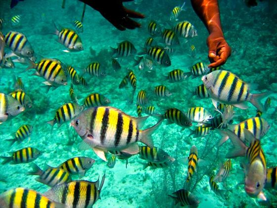 Marine life in Negril