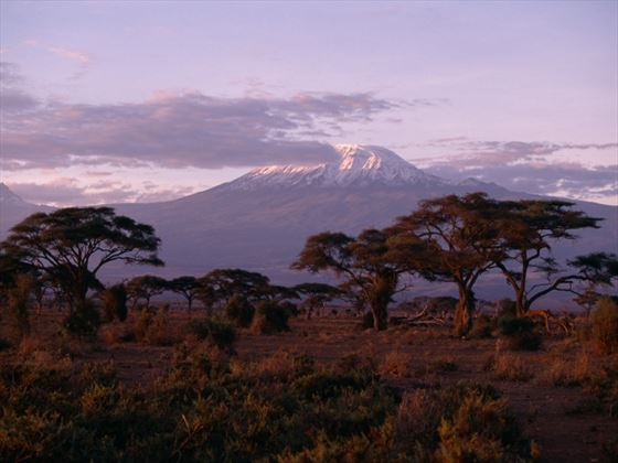 Mount Kilimanjaro National Park Holidays Book Mount