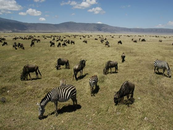 Native wildlife at Ngorongoro Serena Safari Lodge
