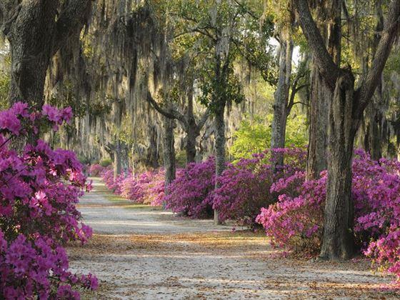 Oaks and azaleas in Savannah