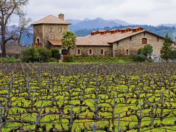 Old vineyards of Napa Valley