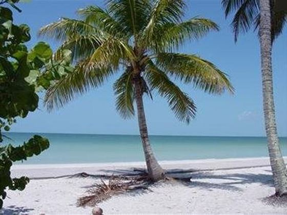 Palm Trees, Fort Myers