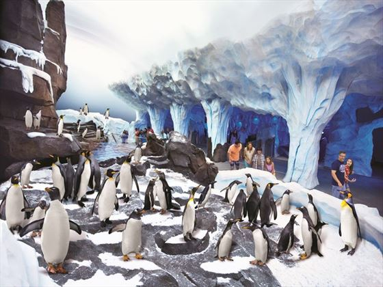 Antarctica: Empire of the Penguin at SeaWorld® Orlando