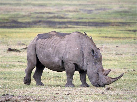 Rhino at Masai Mara National Reserve