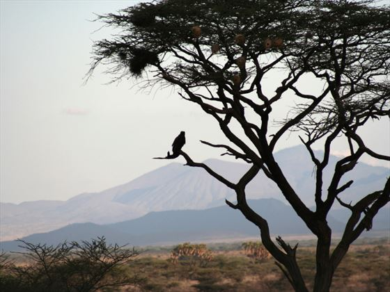 Samburu National Park