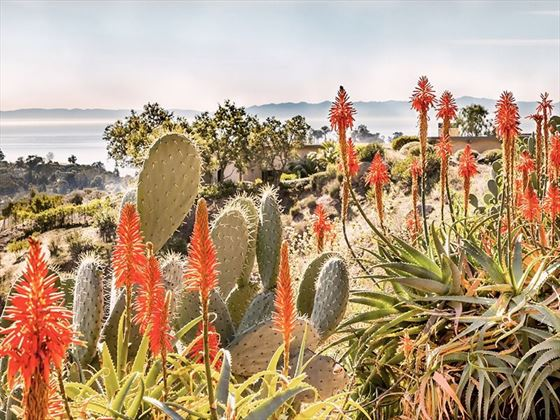 Santa Barbara coastal view between the cacti