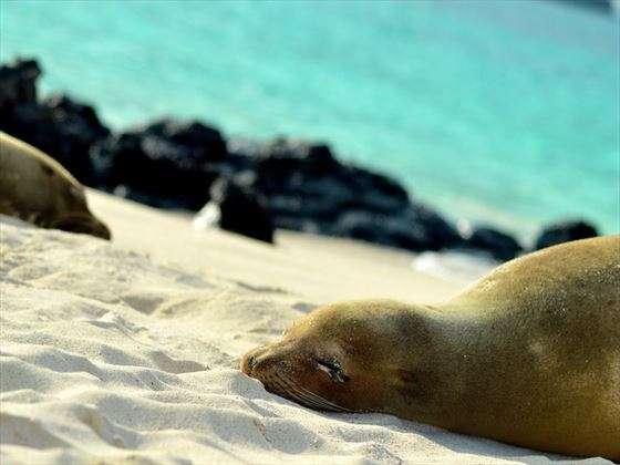 Sleeping sea lion on Isabela Island